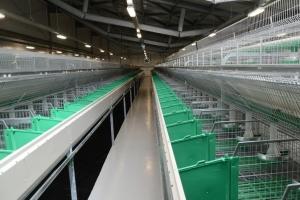 Строительство кроличьей фермы