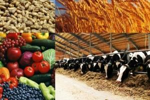 Ищу инвестора партнера в сельское хозяйство. Разведение крупного рогатого скота, птицеводство. Имею землю 4 га.  Нужны средства на постройку и закупку скота. Рассмотрю ваши предложения.
