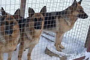 Высокопородный питомник собак GERMAN ONE